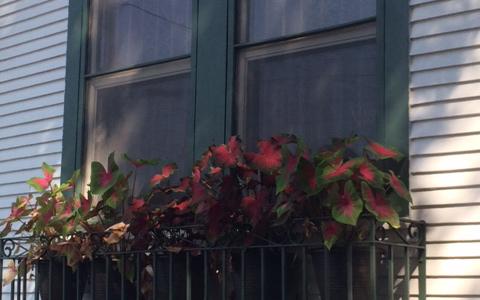 NOLA window plants